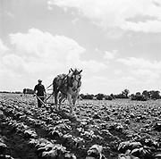 0723-002.  Illinois agricultural scene, 1940s,