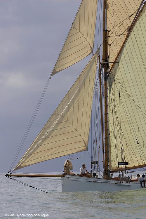 Partridge, voile classique, voile, voilier tradition