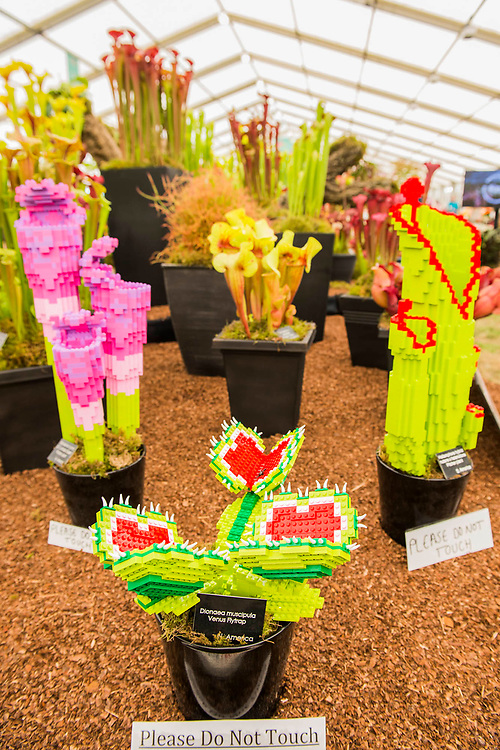 Hampshire Carnivorous Plants and RHS Hampton 2018's Master Grower, Celebrate their 20th anniversary at the show with additional Lego carnivorous plants - Press day at The RHS Hampton Court Flower Show.