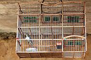 Bird in cage in Ciego de Avila, Cuba.