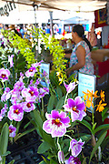 Farmers Market, Hilo, The Big Island of Hawaii