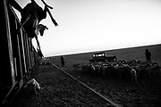 Zouarete, Mauritania - 21 January, 2016:<br /> Removing the goats of the wagons at the end destination in Zouarete.