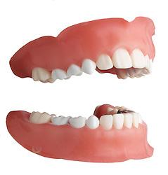 teeth 006 Teeth Dentures