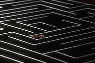 """Deutschland, DEU, Halle/Saale: Goldhamster (Mesocricetus auratus) im 1899 von W.S. Small entwickelten Hampton-Court-Labyrinth an der Martin-Luther-Universität Halle-Wittenberg. Das Labyrinth ist 1,80 x 1,20m groß. Goldhamster können innerhalb von einer Woche lernen, einen Weg durch das Labyrinth zu finden.   Germany, DEU, Halle/Saale: Golden Hamster (Mesocricetus auratus) in the """"Hampton-Court-Labyrinth"""" at the Martin-Luther-University of Halle-Wittenberg, Germany. Developed by W.S. Small in 1899, the labyrinth learning method is used by the experimental ethology, the labyrinth is about 1,80m X 1,20m, within a week Golden Hamsters can learn to find their way through the labyrinth.  """