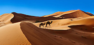 Camels amongst the Sahara sand dunes of erg Chebbi, Morocco, Africa .<br /> <br /> Visit our MOROCCO HISTORIC PLAXES PHOTO COLLECTIONS for more   photos  to download or buy as prints https://funkystock.photoshelter.com/gallery-collection/Morocco-Pictures-Photos-and-Images/C0000ds6t1_cvhPo