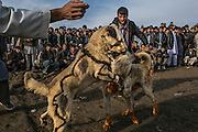 Kabul, Afghanistan - February 21, 2014: Men encourage their dogs to engange in a fight during a traditional dogfighting in Kabul. The sport, which was banned under the Taliban, who considered it as un-Islamic, is now legal and gather hundreds of people every Friday afternoon, staged on a dirt pitch on the outskirts of Kabul. CREDIT: Photo by Mauricio Lima for The New York Times