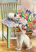 Cats @ Dogs