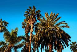 Dawn in the garden at the Palais Riad Hida, Oulad Barrehil, Taroudant Province, Souss-Massa region, Morocco, North Africa<br /> <br /> (c) Andrew Wilson   Edinburgh Elite media