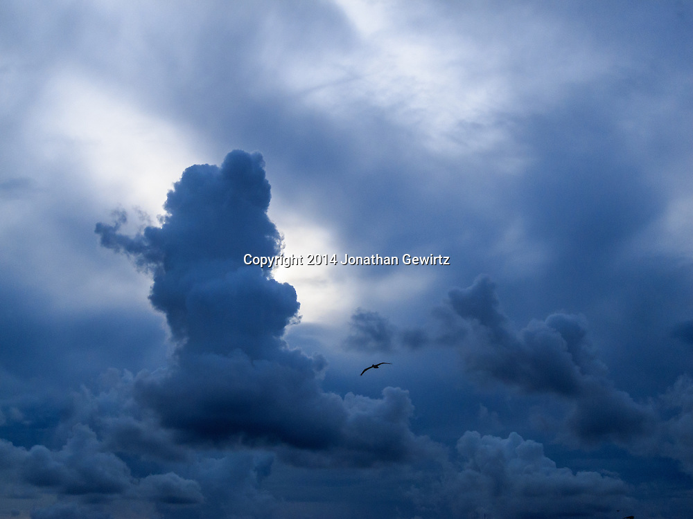 A solitary pelican flies past dramatic low clouds on a stormy Florida afternoon.<br /> <br /> WATERMARKS WILL NOT APPEAR ON PRINTS OR LICENSED IMAGES.