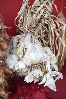 Garlic Drying hung up