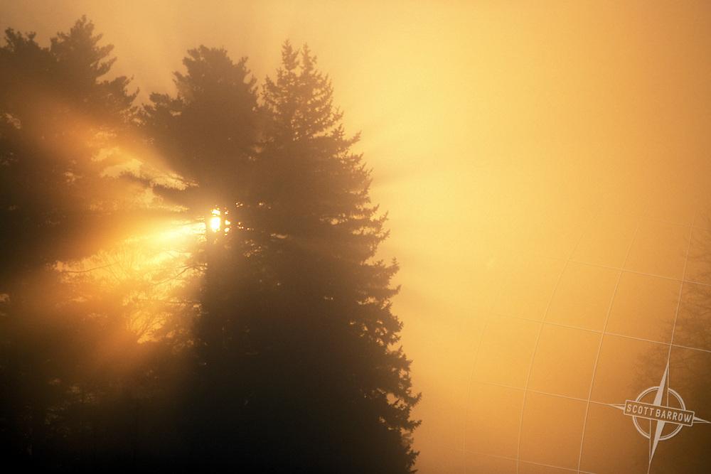 Sun shining through trees on foggy morning.