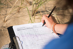 Project Officer Emma Witcutt making notes after observing colony, Little tern Sternula albifrons monitoring site, part of an EU Life Project to protect this species, Winterton-on-Sea, Norfolk, July