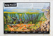 Interpretive display of the kelp forests on Anacapa Island, Channel Islands National Park, California