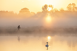 October 10, 2018 - London, London, UK - London, UK. A man walks around a lake at sunrise in Bushy Park, south London. Forecasters are expecting unusually warm temperatures for October. (Credit Image: © Rob Pinney/London News Pictures via ZUMA Wire)