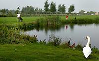 Nieuwerkerk aan de IJssel - Openbare golfbaan Hitland. Zwaan , vogel, .Foto KOEN SUYK