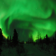 Northern Lights shine brightly over the black spruce trees in Wapusk National Park in temperatures of -46F. Canada