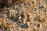 The soil with much lime stone at Mas de Gourgonnier, in Les Baux de Provence, Bouche du Rhone, France