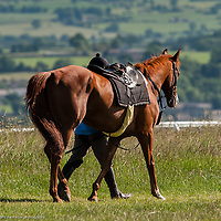 Jockey and horse walk, Middleham Gallops