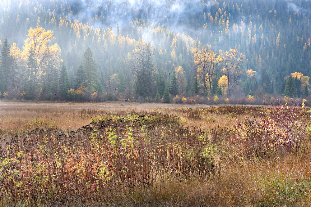Autumn Colors and Fog in Pasture and Forest, Northern Idaho