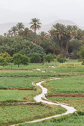 Irrigated field, Atlas Mountains, Morocco