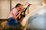 """William DeShazer/The Herald<br /> Jessica Schaeffer, 10, of Huntingburg, pets her favorite cow Knuckles before the start of the beef show at the 4-H County Fair on Wednesday evening.  Jessica's favorite part of the fair is spending all the time with the animals.  """"This year he kinda behaves me,"""" said Jessica."""