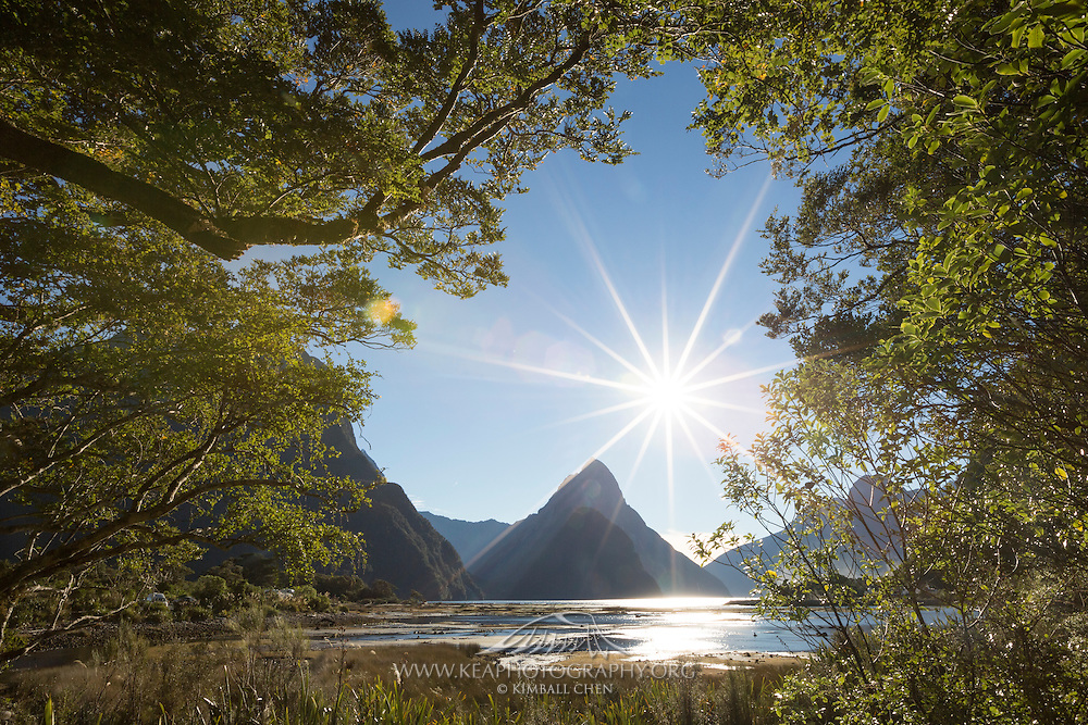 The edge of the forest frames Mitre Peak, in Milford Sound.  After finishing the 4-day Milford Track, a a boat ride through the Milford Sound takes you past the cone-shaped Mitre Peak.