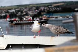 UK ENGLAND DEVON TEIGNMOUTH 10SEP16 - Teignmouth harbour, Devon, England.<br /> <br /> jre/Photo by Jiri Rezac<br /> <br /> © Jiri Rezac 2016