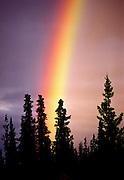 Rainbow in evergreens - Alaska