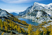 At the Enchantment Lakes, larch trees drop golden needles in late September under Little Annapurna in the Stuart Range, in Alpine Lakes Wilderness Area, near Leavenworth, Washington, USA.