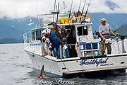 charter recreational fishing boat brings in a salmon shark, Lamna ditropis, Port Fidalgo, Prince William Sound, Alaska, U.S.A.