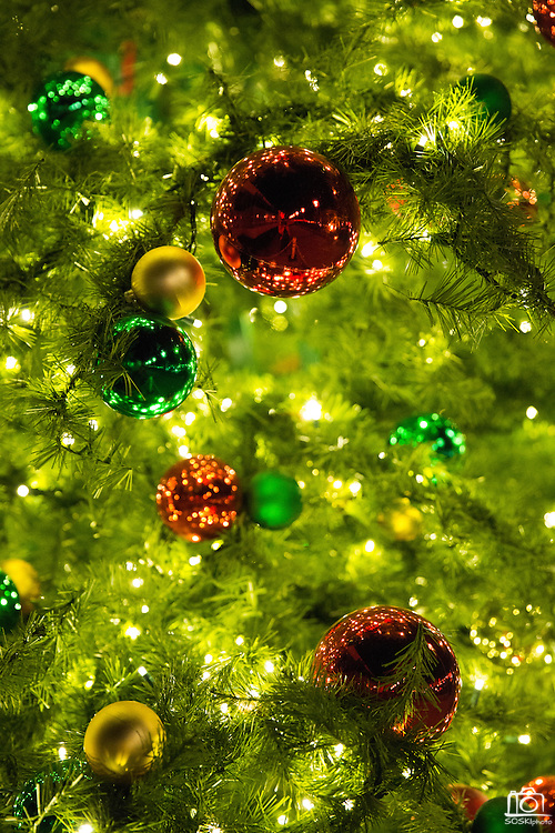 The Milpitas Christmas Tree is decorated with white lights and ornaments during the Milpitas Christmas Tree Lighting Ceremony at Milpitas City Hall, in Milpitas, California, on December 1, 2013. (Stan Olszewski/SOSKIphoto)