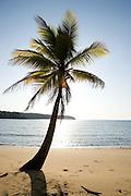 Palm tree on a sandy beach