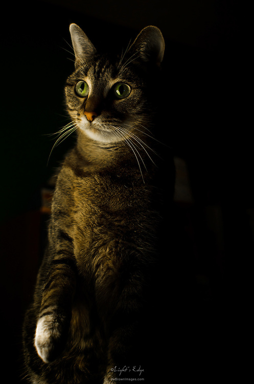 Zoe intently watching and waiting to strike at a moth that had moved inside. She found it to be tasty.