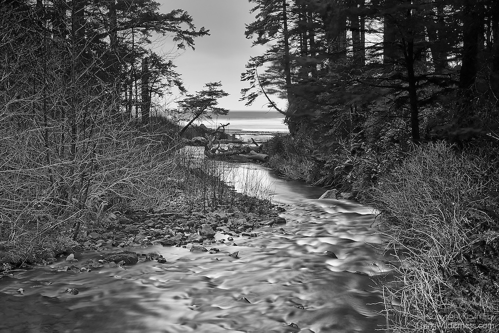 Short Sands Creek winds through a forest just before it reaches the Pacific Ocean in Oswald West State Park on the Oregon Coast.