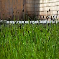 North America, Canda, Nova Scotia, Guysborough County. Grassy yard of yellow weathered home of Nova Scotia.