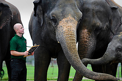 © Licensed to London News Pictures. 10/01/2012 Whipsnade, UK. .Stefan Greonvald, elephant keeper at Whipsnade Zoo takes part in the zoo's annual stock take. The mammoth task involves counting every animal, great or small at the UK's biggest Zoo which is  home to more than 200 different species. Photo credit : Simon Jacobs/LNP