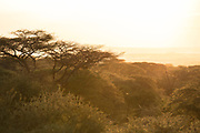 Scenic landscape with view of acacia trees under an orange sky at sunset, Kisongo, Arusha Region, Tanzania