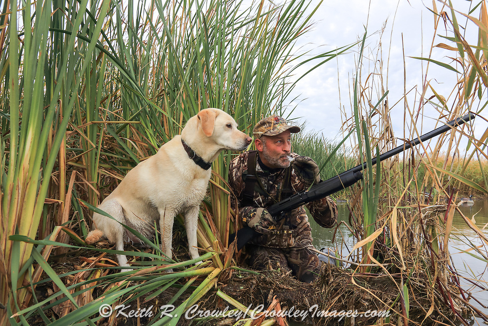 Waterfowl hunter calls ducks with his dog during a Manitoba hunt.