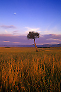 Image of a tree and grasslands at the Masai Mara National Reserve in Kenya, Africa by Randy Wells