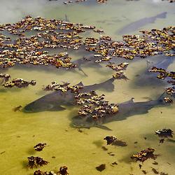 """""""Lagoa Juparanã (Paisagem) fotografado em Linhares, Espírito Santo -  Sudeste do Brasil. Bioma Mata Atlântica. Registro feito em 2012.<br /> <br /> <br /> <br /> ENGLISH: Juparanã Pond photographed in Linhares, Espírito Santo - Southeast of Brazil. Atlantic Forest Biome. Picture made in 2012."""""""