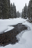 I went snowshoeing a few miles on this snowmobile trail in the Bighorn Mountains since I had never explored it before. The South Tongue River could only be seen in a few places, it was mostly frozen.