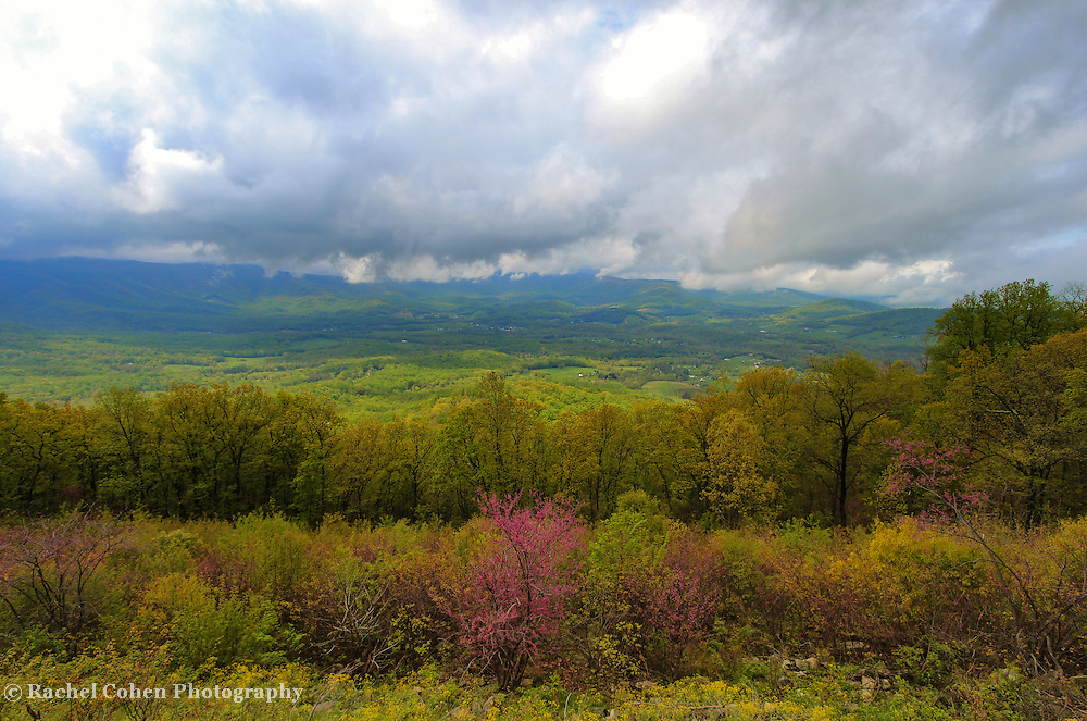 """""""View to a Spring Storm""""<br /> <br /> Lovely spring flowers, and tender green leaves on trees in the foreground contrast with the stormy mountain view behind!!<br /> <br /> The Blue Ridge Mountains by Rachel Cohen"""