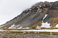 Camp Miller, Bellsund, Svalbard, Norway, Europe