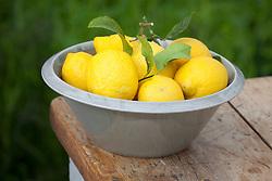 Lemons in grey fruit bowl
