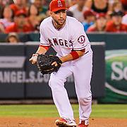 Aug 30 2014 - Anaheim U.S. CA - Angels 3rd base # 8 John McDonald during MLB game between LA Angels and  Oakland Athletics 2-0 win at Angel Stadium of Anaheim Calif.