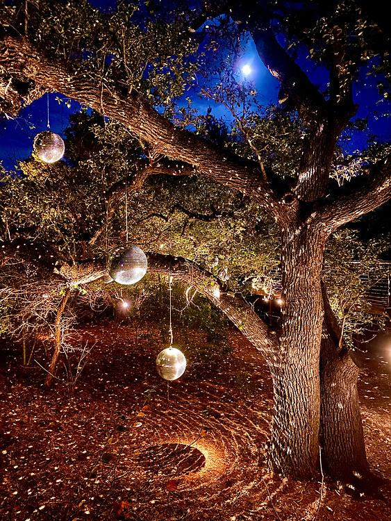 Luminations, Lady Bird Johnson Wildflower Center, Austin, Texas