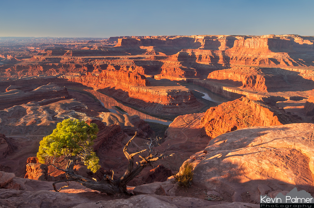 Early morning sunlight lights up the cliffs in Canyonlands National Park. This view is from Dead Horse Point, looking south into the canyon formed by the Colorado River 2000 feet below. The juniper tree in the foreground is a tough plant that survives the dry heat and cold of the desert. It can take decades for it to grow to even this small size.<br />