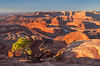 Early morning sunlight lights up the cliffs in Canyonlands National Park. This view is from Dead Horse Point, looking south into the canyon formed by the Colorado River 2000 feet below. The juniper tree in the foreground is a tough plant that survives the dry heat and cold of the desert. It can take decades for it to grow to even this small size.<br /> <br /> Date Taken: 11/6/2013