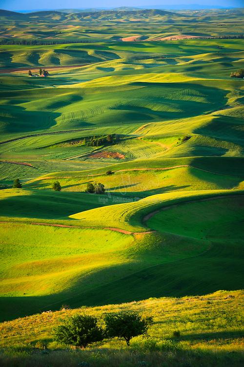 Farm fields surrounding Steptoe Butte in the eastern Washington Palouse area