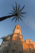 Low angle view of Cadiz Cathedral and palm tree in Cadiz, Spain